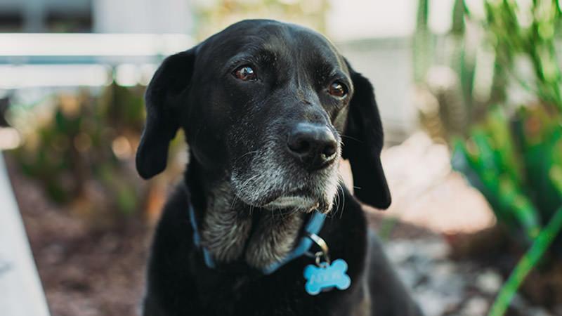 Στεναχωρημένο σκυλάκι